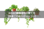 IKEAの観葉植物の育て方【今度こそ枯らさないコツ】